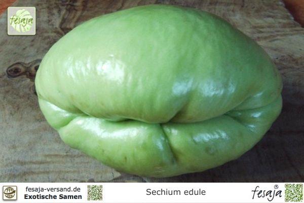 Chayote, Sechium edule