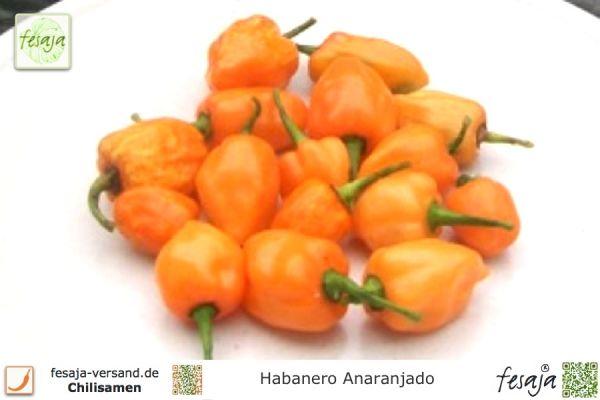 Habanero Anaranjado