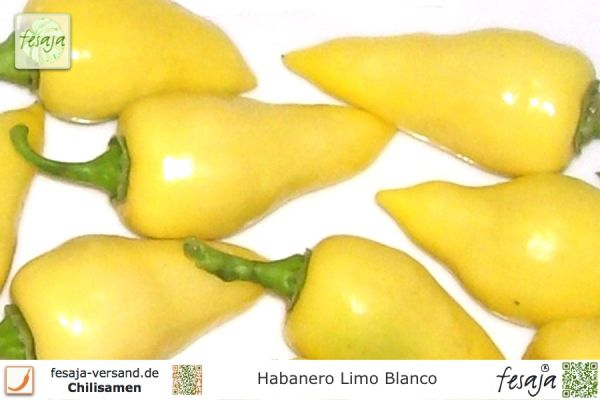 Habanero Limo Blanco