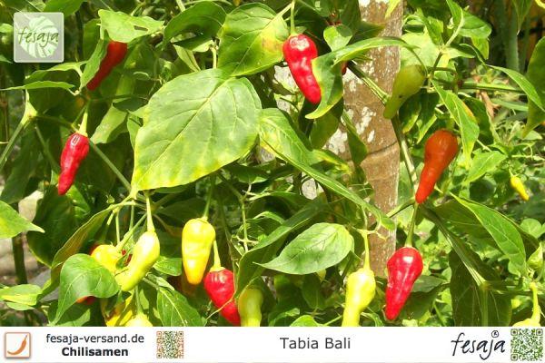 Tabia Bali