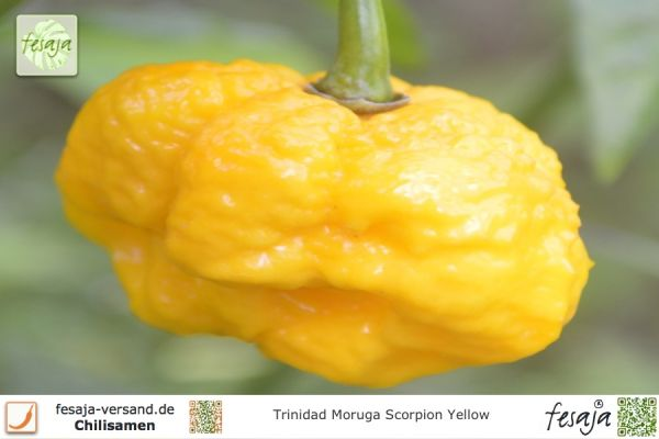 Trinidad Moruga Scorpion Yellow