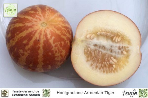 Honigmelone Armenian Tiger, Cucumis melo