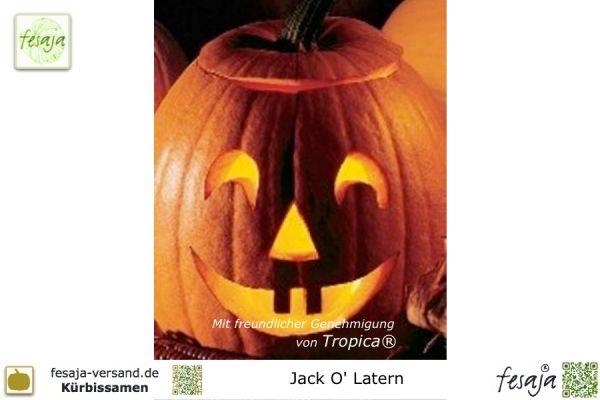 Jack O'Lantern, Curcubita pepo