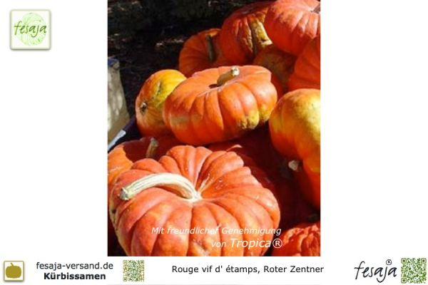 Rouge vif d`Etampes, Roter Zentner, Curcubita maxima