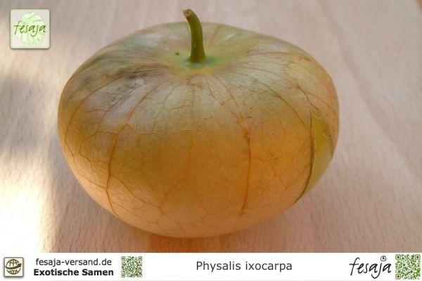 Mexikanische Tomatillo, Physalis philadelphica