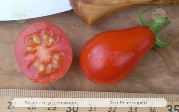 Red Pearshaped