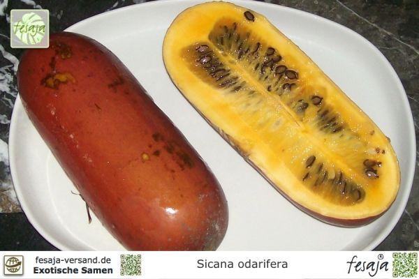 Cassabanana, Sicana odorifera