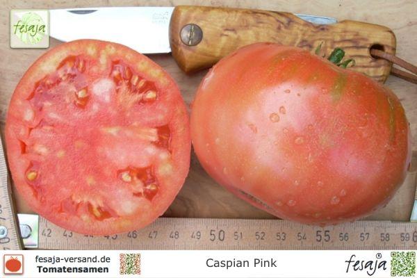 Caspian Pink