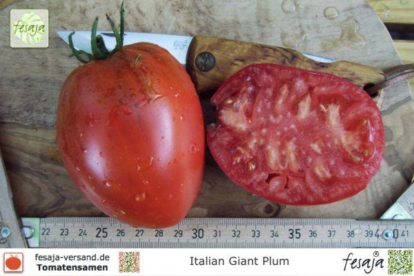 Italian Giant Plum