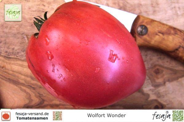 Wolfort Wonder