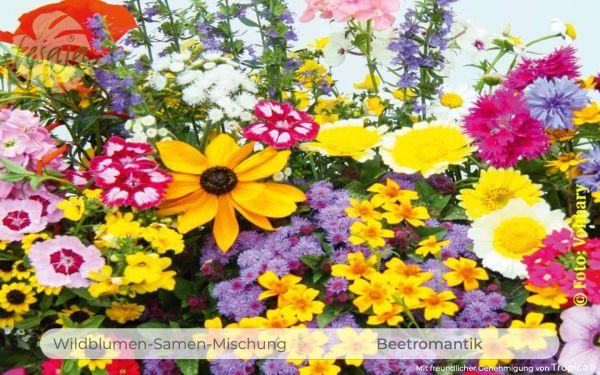 Beetromantik · Wildblumen Mischung