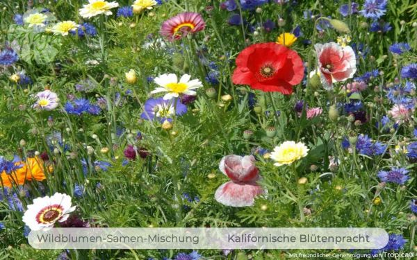 Kalifornische Blütenpracht · Wildblumen Mischung