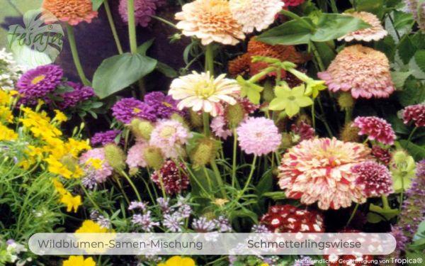 Schmetterlingswiese · Wildblumen Mischung