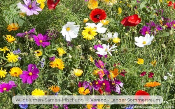 Verano · Wildblumen Mischung