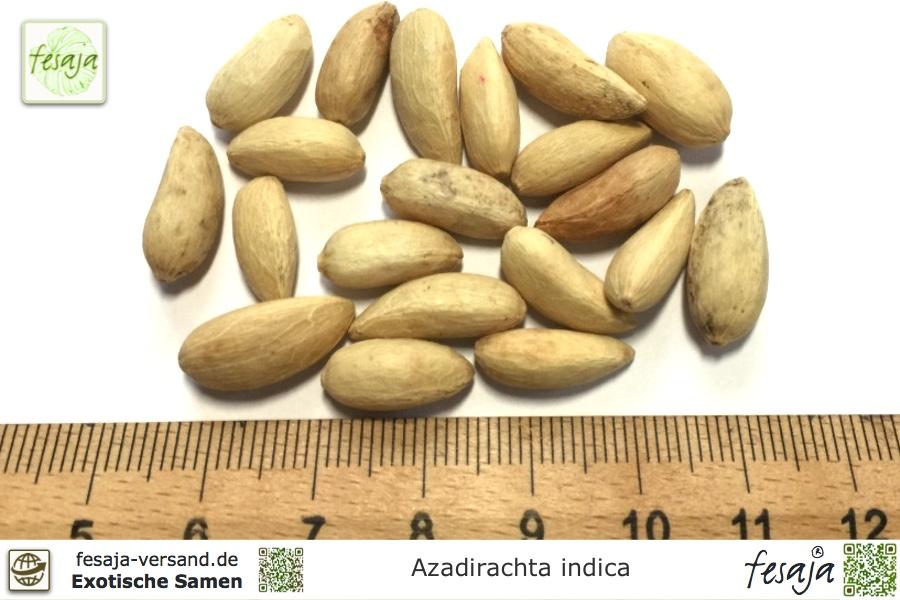 Niembaum, Azadirachta indica
