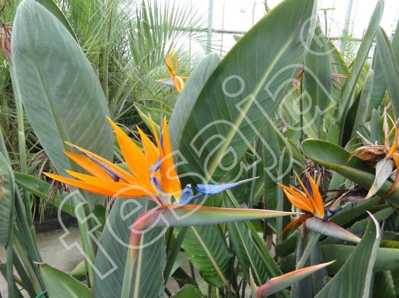 Informationen Zum Versand Von Kübelpflanzen Pflanzen Versand