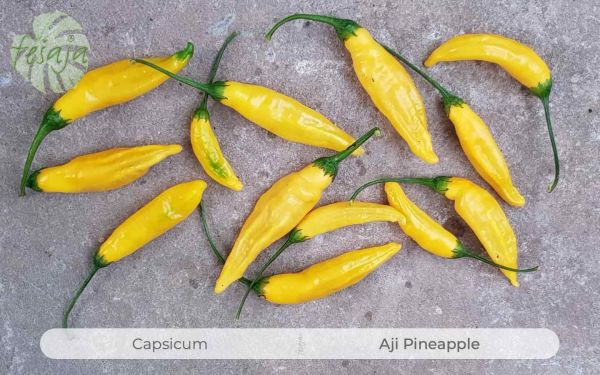 Aji Pineapple, Capsicum, Chili