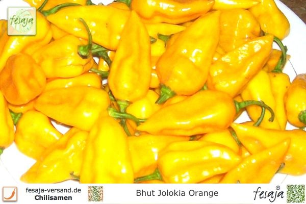 Bhut Jolokia Orange, Chili, Samen