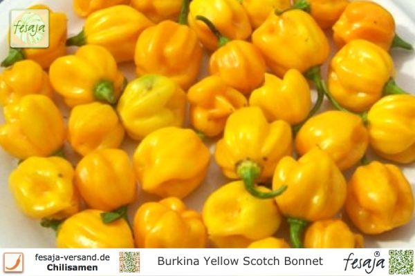 Burkina Yellow Scotch Bonnet, Chili, Samen