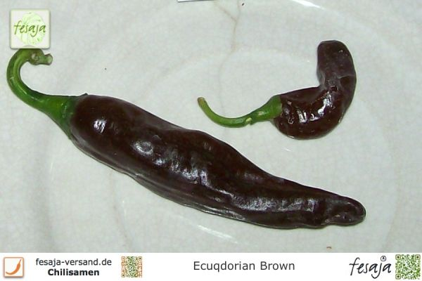Ecuadorian Brown
