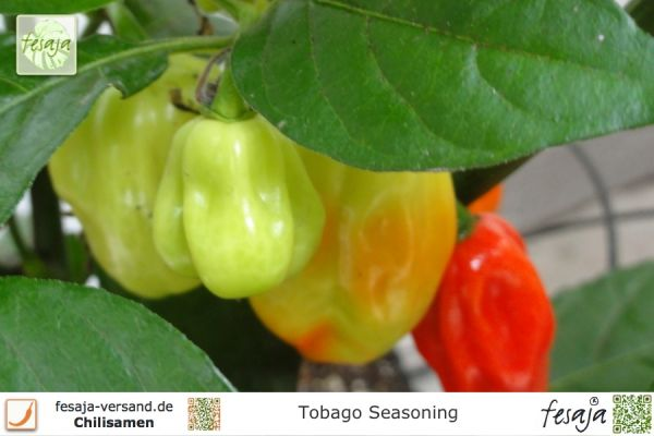 Chili Tobago Seasoning