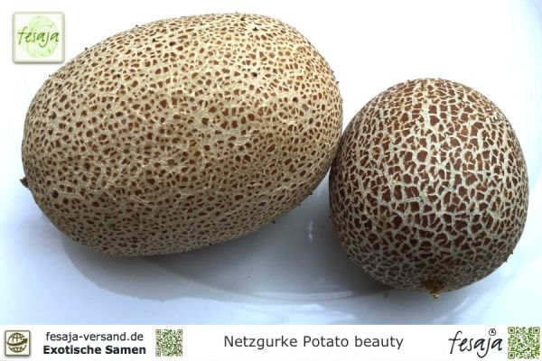 Netzgurke Potato Beauty, Cucumis sativus