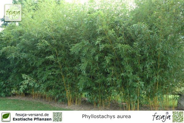 Gräser Pflanzen gräser pflanzen fesaja versand