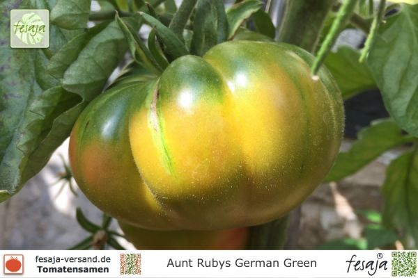 Tomate Aunt Rubys German Green