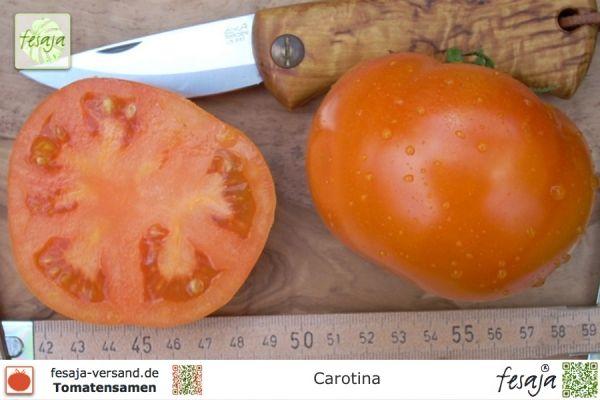 carotina tomaten samen fesaja versand. Black Bedroom Furniture Sets. Home Design Ideas