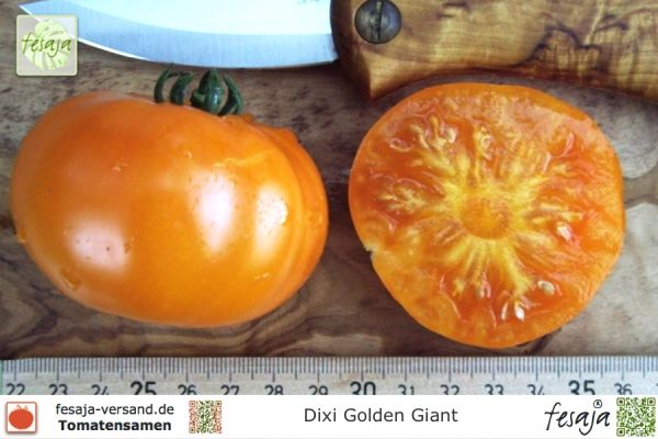 Dixie Golden Giant