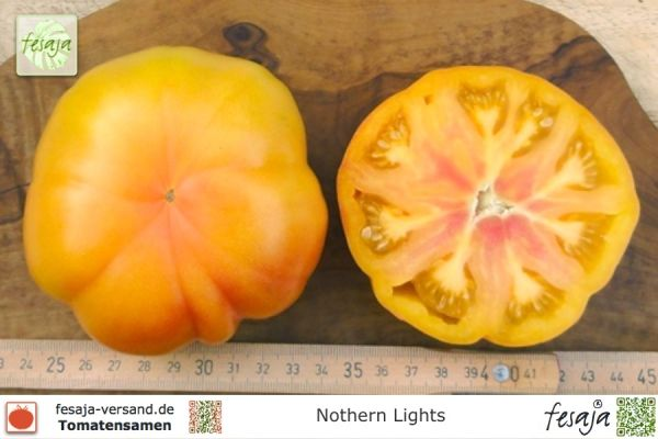 Tomate Nothern Lights