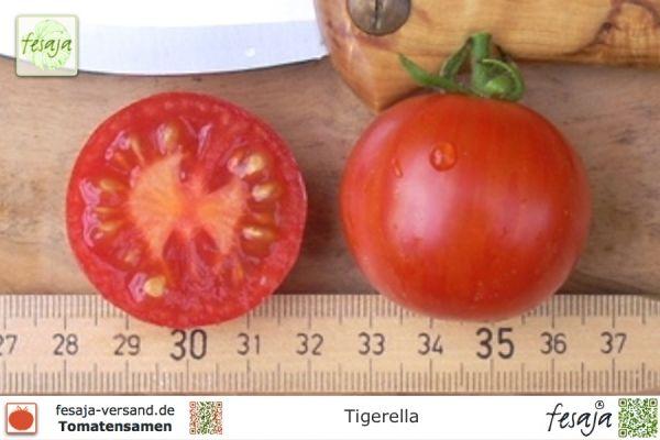 tigerella tomaten samen fesaja versand. Black Bedroom Furniture Sets. Home Design Ideas