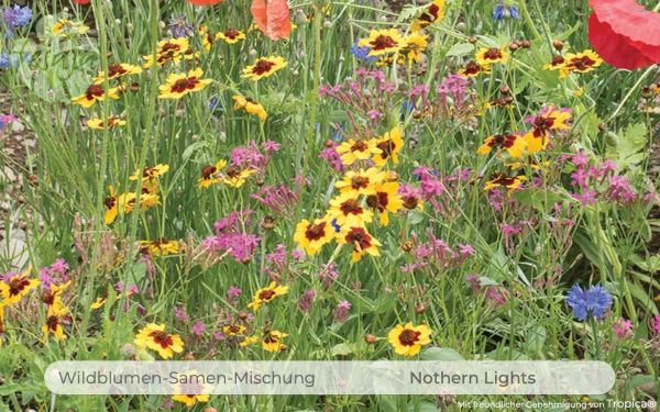 Northern Lights · Wildblumen Mischung