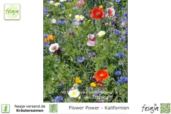 Flower Power - Kalifornien