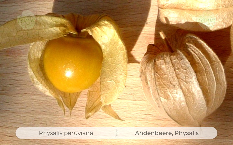 Gemüsesamen Physalis peruviana Andenbeere Solanaceae 30 Samen