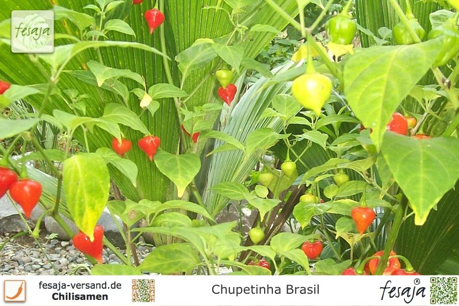 Chupetinha Brasil