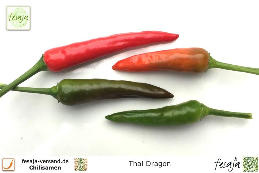 Thai Dragon - fesaja-versand