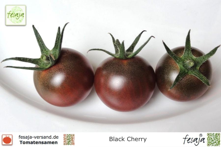 black cherry tomaten samen fesaja versand. Black Bedroom Furniture Sets. Home Design Ideas