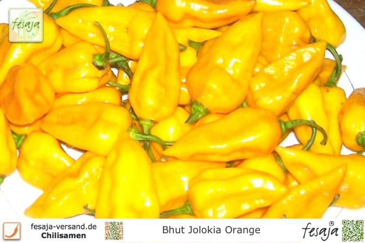 Bhut Jolokia Orange