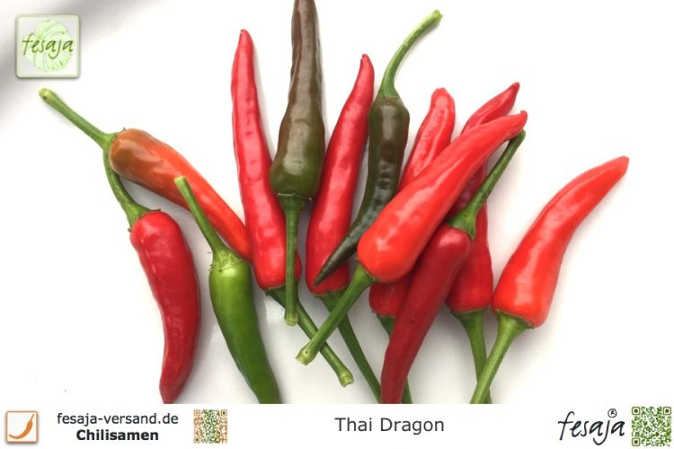 Chili Thai Dragon
