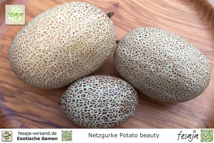Netzgurke Potato beauty