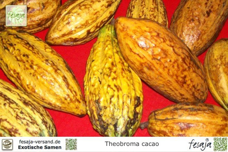 Bananensamen wird verwendet, um Gewicht zu verlieren