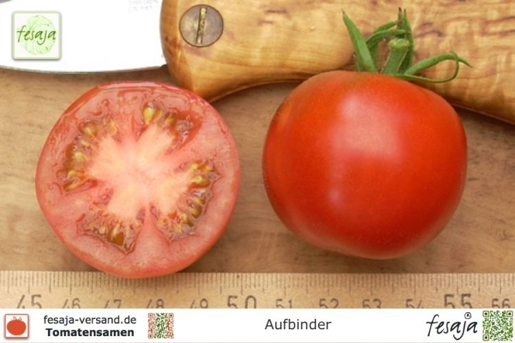 Tomate Aufbinder