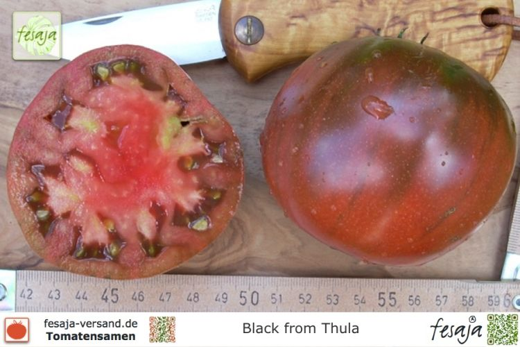 Tomate Black from Thula