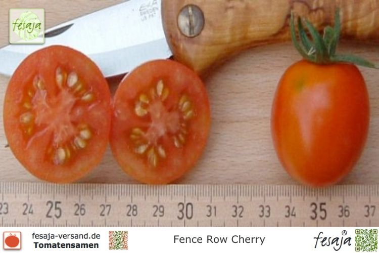 Tomate Fence Row Cherry