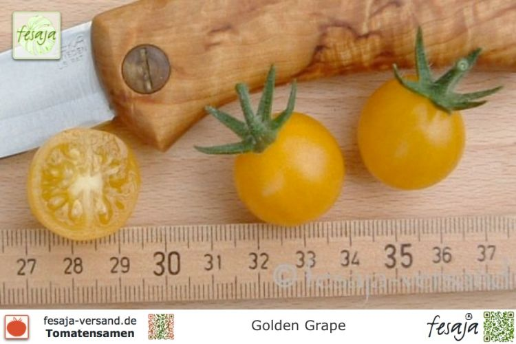 Tomate Golden Grape