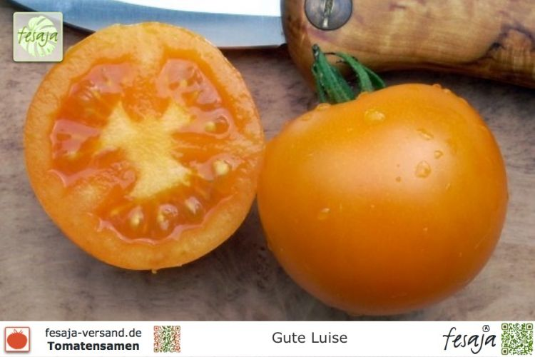 Tomate Gute Luise