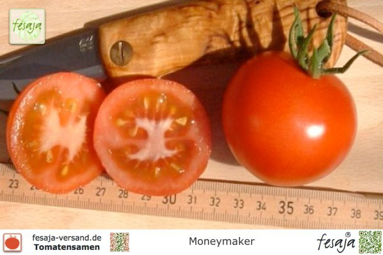 Tomate Moneymaker